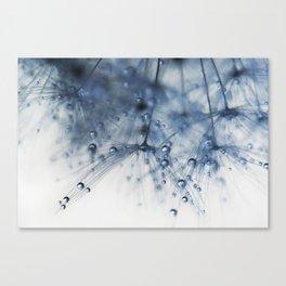 dandelion blue drop Canvas Print