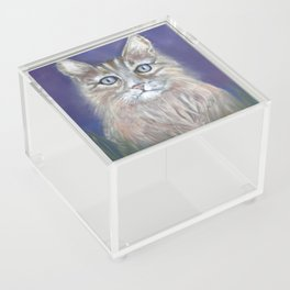 CUTE YOUNG TABBY CAT GREY BEIGE CHALK PASTEL DRAWING Acrylic Box
