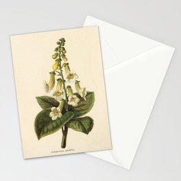 1800s Encyclopedia Print of Flower (Achimenes Amabilis) Stationery Cards