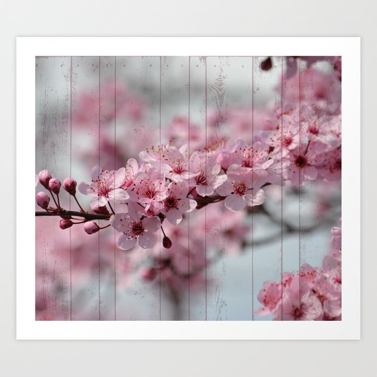 Cherry Blossoms on Wood Art Print
