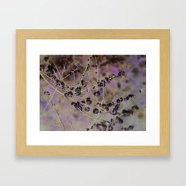Thorny blossoms Framed Art Print