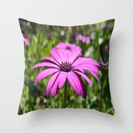 Macro Shot Of A Purple Osteospermum Throw Pillow