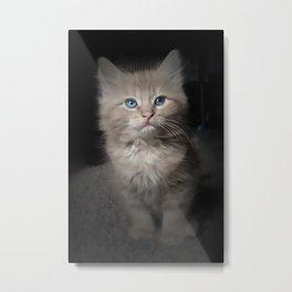 Blue Eyed Kitten Metal Print