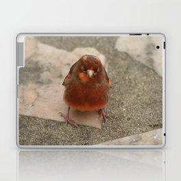 Cute runaway canary bird Laptop & iPad Skin