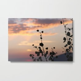 aspen trees close-up at sunset - telluride, CO Metal Print