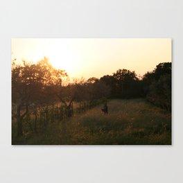 perso tra gli alberi di ulivo Canvas Print