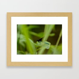 Ebony Jewelwing Framed Art Print