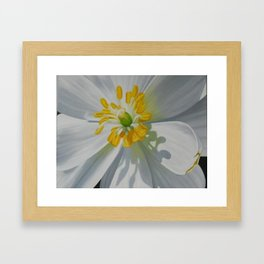 Bloodroot Up Close Framed Art Print