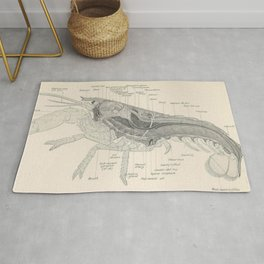 Vintage Lobster Anatomy Diagram (1911) Rug