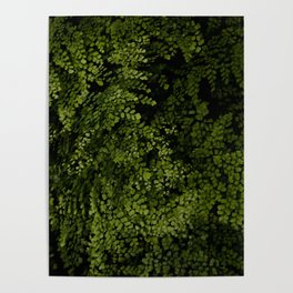 Small leaves Poster