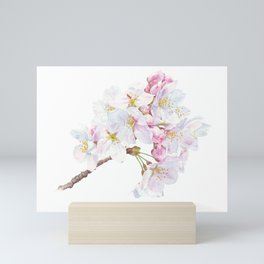 Someiyoshino Sakura Cherry Blossoms Mini Art Print