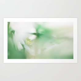 Hellebore and leaves Art Print