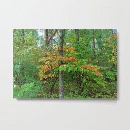 In the Wild Woods Metal Print