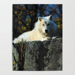 Sentinel: Arctic Wolf Poster