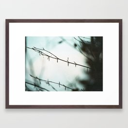Fragile in the cold Framed Art Print