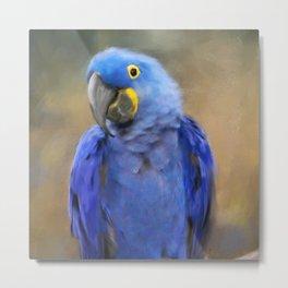 Hyacinth Macaw Metal Print