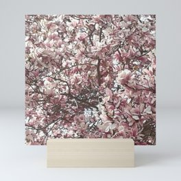 Magnolia Blossoms Mini Art Print