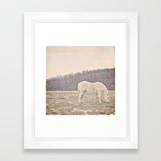 Pretty White Pony  Framed Art Print