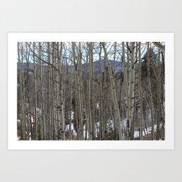 Aspen 2# Art Print