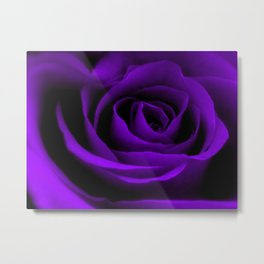A Purple Rose Metal Print