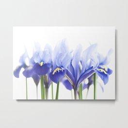 Bue Iris 2 Metal Print