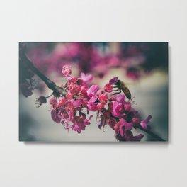 a redbud bee Metal Print