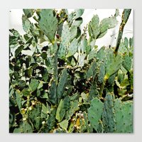 cacti Canvas Prints featuring Cacti by PoseManikin