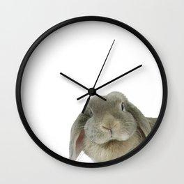 Holland Lop Rabbit Wall Clock