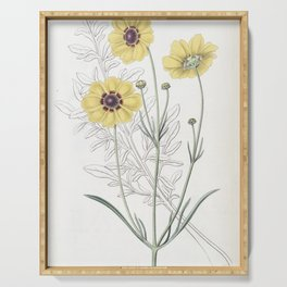 Flower 1376 coreopsis atkinsoniana Perennial Dyer s Coreopsis14 Serving Tray
