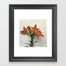 Botanical Lily No. 7797 Framed Art Print