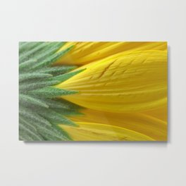 Yellow Daisy Macro Metal Print