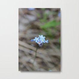 Many Forget-Me-Nots Metal Print