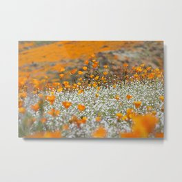 Babies Breath and Golden Poppies of California by Reay of Light Photography Metal Print