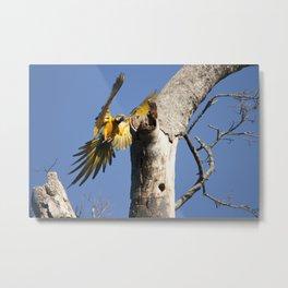 Birds from Pantanal Arara Canindé Metal Print