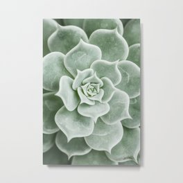 Succulent lover close up view Metal Print
