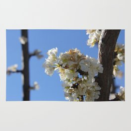 Fruit Blossoms Rug