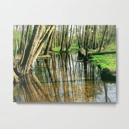 Photo: swamp/ trees reflecting in water Metal Print