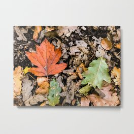 Autumnal leaves on the ground Metal Print
