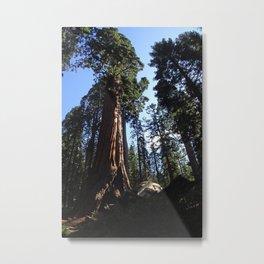 Sequoia at Kings Canyon Metal Print
