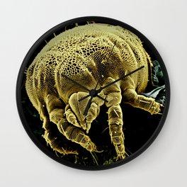 Yellow mite (Tydeidae) Wall Clock