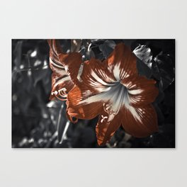 The Blooming Desert Canvas Print