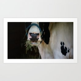 Cow Chewing Hay Art Print