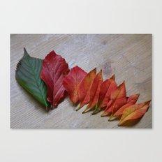 Color Transition Canvas Print
