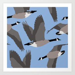 Canada Geese Flying in Blue Art Print