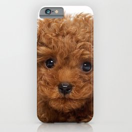 Little Brown Toy Poodle iPhone Case