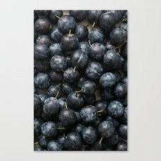 Damson Plums Canvas Print