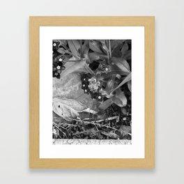Black Buzzy Framed Art Print