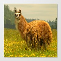 llama Canvas Prints featuring Llama by Nature In Art...