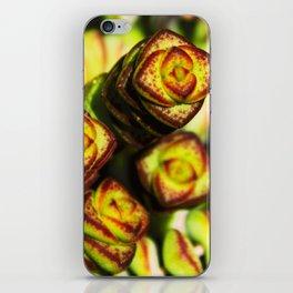 succulent cactus II iPhone Skin