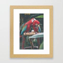 Morning Birbs Framed Art Print
